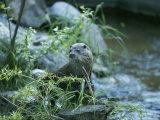 An Otter Sits Beside a River