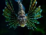Close Up of Colorful Fish Underwater