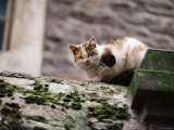 Cat Crouch on Rocky Moss-Covered Surface