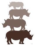 Brown Rhino