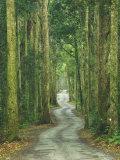 Road through Rainforest, Lamington National Park, Gold Coast Hinterland, Queensland, Australia