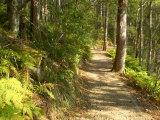 Track to Kondalilla Falls, Kondalilla National Park, Sunshine Coast, Queensland, Australia