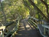 Mangrove Boardwalk, City Botanic Gardens, Brisbane, Queensland, Australia