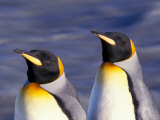 Pair of King Penguins with Rushing Water, South Georgia Island