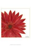 Bright Blossoms II