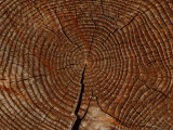 Close-Up of a Cut Log with an Intricate Pattern of Rings
