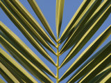Close-Up of a Palm Frond Against a Blue Sky