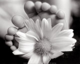 Baby's Feet with Blossom