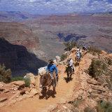 Returning on Horseback, Grand Canyon, UNESCO World Heritage Site, Arizona, USA