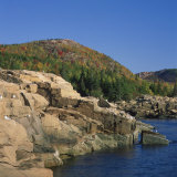 Gulls on Rocks Along the Coastline, in the Acadia National Park, Maine, New England, USA