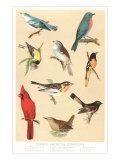 Common American Songbirds