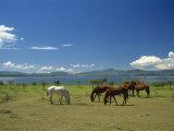 Horses Next to Lake Naivasha, Rift Valley, Kenya, East Africa, Africa