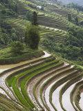 Terraced Rice Fields, Yuanyang. Yunnan Province, China