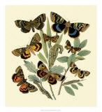 Butterfly Gathering III