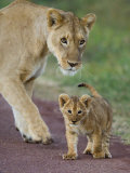 Close-up of a Lioness and Her Cub, Ngorongoro Crater, Ngorongoro Conservation Area
