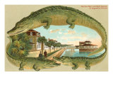 Alligators, Sea Wall, St. Augustine, Florida