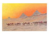 Pyramids, Camels, Egypt