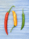 Yellow Red and Green Chilli Peppers Chillies Freshly Harvested on Pale Blue Background