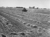 Flax Fields in Imperial Valley, Harvesting