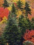 Fall Colors in the Southern Appalachian Mountains, North Carolina, USA