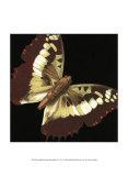 Dramatic Butterflies IV