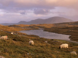 North Harris Hills Near Govig, Sheep and Lochan, North Harris, Outer Hebrides, Scotland