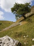 Cressbrook Dale, White Peak, Peak District National Park, Derbyshire, England, United Kingdom