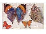 Interesting Butterflies