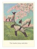 Lambs Jump and Play