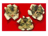 Three Cats Poking Through Paper