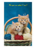 Do You See What I See? Kittens in Basket with Yarn