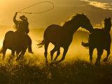 Cowboy on Horseback, Ponderosa Ranch, Seneca, Oregon, USA