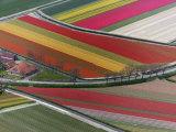 Flower field patterns surrounding Amsterdam, Holland