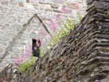 Flowers and Church Ruins, County Waterford, Ireland