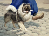Keeshond Carries a Rolled Newspaper