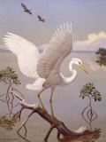 Great White Heron, White Morph of Great Blue Heron, Spreads its Wings