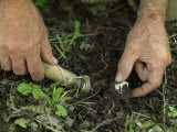 Man Digs Up Truffles Outside the City of Gubbio