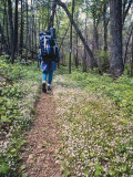 Woman Backpacking a Woodland Trail Through Wildflowers