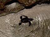 Tiny Endangered Green Sea Turtle Hatchling Swims to Sea at Night