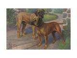 Portrait of an Old English Mastiff and a Bull Mastiff