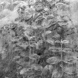 Plant Pressed Up to Glass in a Greenhouse Creates an Abstract Pattern
