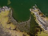 Flamingos and Land Formations Along the Shore of Lake Turkana