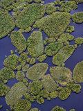 Vegetation Floating on Lake Wamala and Reflections