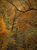 Mixed Hardwood Forest in Autumn Hues