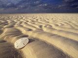 Sand Dollar Lies on a Sandy Beach