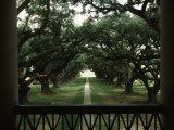 Oak Trees in Front of a Mansion, Oak Alley Plantation, Vacherie, Louisiana, USA