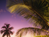 St Lucia, Sunset Through Palms on the Island of St Lucia, Caribbean