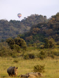 Group of White Rhinos and Balloon, Pilanesberg National Park, Sun City, South Africa, Africa
