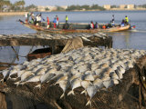 Fish and Boat, Saint Louis, Senegal, West Africa, Africa