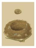 Antique Nest and Egg IV